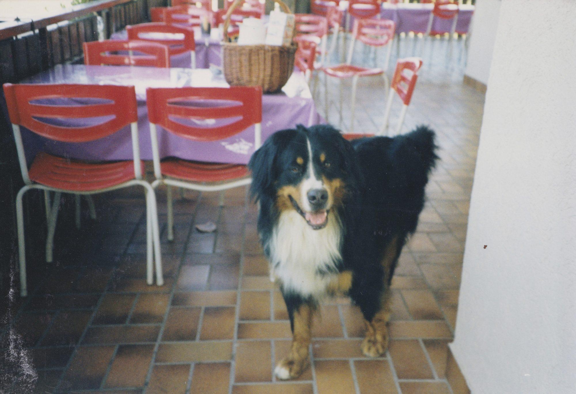 Zorro auf dem Balkon der Sportgaststätte meines Vaters im Sommer 1991.