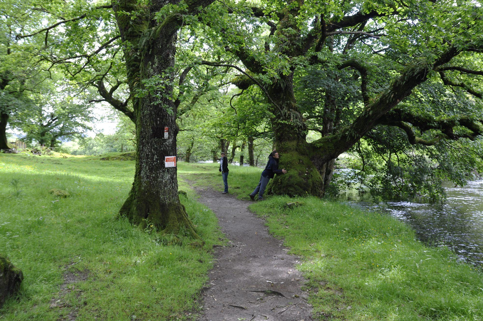 Juni 2011 – In Wales. Peter schmust mit Bäumen.