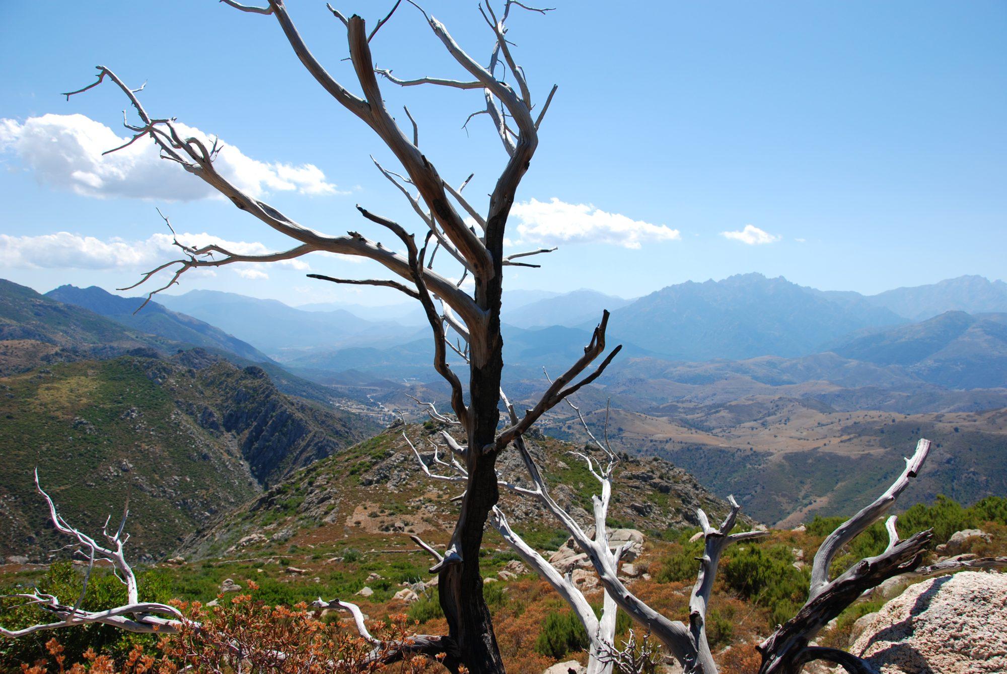 2008 - Korsika