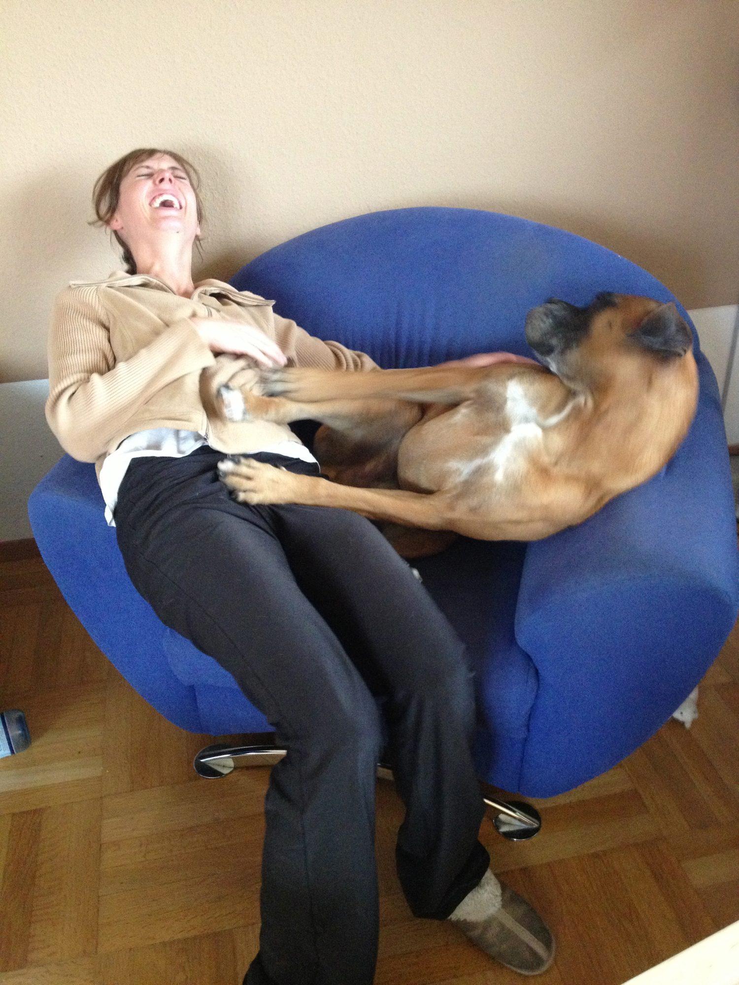 2012 - Barnie und Luisa und der Kampf um den Sessel.
