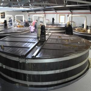 Glen Fiddich Destillery 2011 - Maischen. Das geschrotete malz wird mit warmem Wasser vermischt.