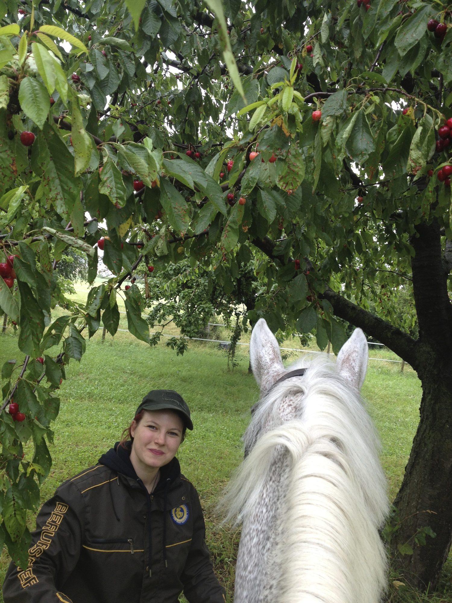 Auf einem Pferd hat man die ideale Höhe für die guten Kirschen!